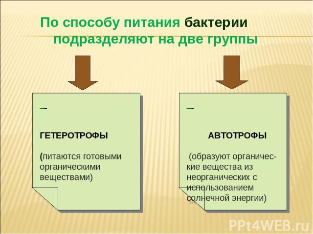 По способу питания бактерии подразделяют на две группы ГЕТЕРОТРОФЫ (питаются готовыми органическими веществами) АВТОТРОФЫ (образуют органичес- кие вещества из неорганических с использованием солнечной энергии)