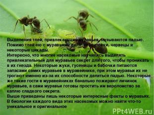 . Выделения тлей, привлекающие муравьев, называются падью. Помимо тлей ею с мура