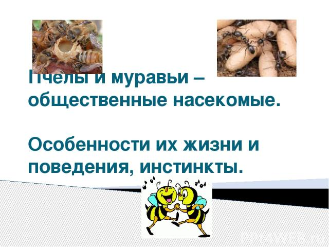 Пчёлы и муравьи – общественные насекомые. Особенности их жизни и поведения, инстинкты.