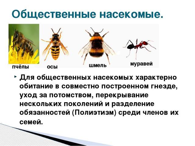 Для общественных насекомых характерно обитание в совместно построенном гнезде, уход за потомством, перекрывание нескольких поколений и разделение обязанностей (Полиэтизм) среди членов их семей. Общественные насекомые. пчёлы осы шмель муравей