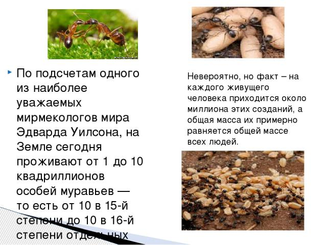 По подсчетам одного из наиболее уважаемых мирмекологов мира Эдварда Уилсона, на Земле сегодня проживают от 1 до 10 квадриллионов особей муравьев — то есть от 10 в 15-й степени до 10 в 16-й степени отдельных муравьев. Невероятно, но факт – на каждого…