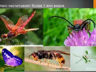 Класс насчитывает более 1 млн видов.