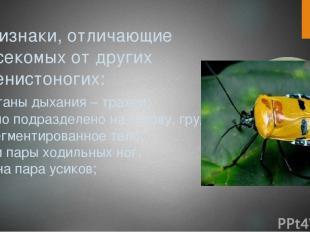 Признаки, отличающие насекомых от других членистоногих: -органы дыхания – трахеи