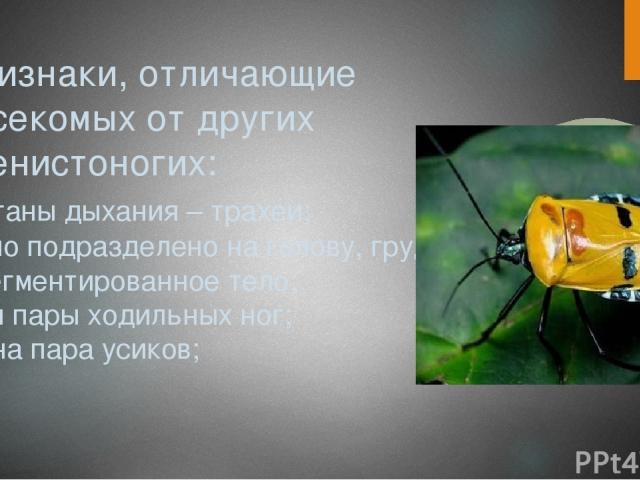 Признаки, отличающие насекомых от других членистоногих: -органы дыхания – трахеи; -тело подразделено на голову, грудь и сегментированное тело; -три пары ходильных ног; -одна пара усиков;