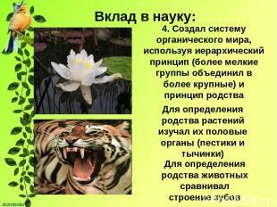Вклад в науку: 4. Создал систему органического мира, используя иерархический при