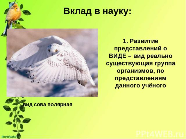 Вклад в науку: 1. Развитие представлений о ВИДЕ – вид реально существующая группа организмов, по представлениям данного учёного вид сова полярная