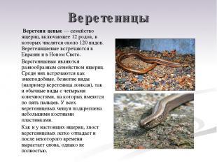 Веретеницы Веретени цевые — семейство ящериц, включающее 12 родов, в которых чис