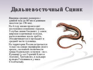 Дальневосточный Сцинк Ящерица средних размеров с длиной тела до 80 мм и длинным