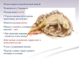 Кожа покрыта мелкой роговой чешуей Конечности с 5 пальцами. Пальцы имеют когти.