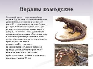 Вараны комодские Комодский варан — ящерица семейства варанов. Крупнейшая ящерица