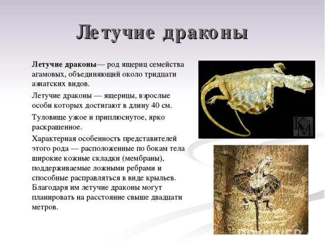 Летучие драконы Летучие драконы— род ящериц семейства агамовых, объединяющий около тридцати азиатских видов. Летучие драконы— ящерицы, взрослые особи которых достигают в длину 40см. Туловище узкое и приплюснутое, ярко раскрашенное. Характерная осо…