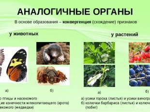 АНАЛОГИЧНЫЕ ОРГАНЫ у животных у растений а) крыло птицы и насекомого б) роющие к
