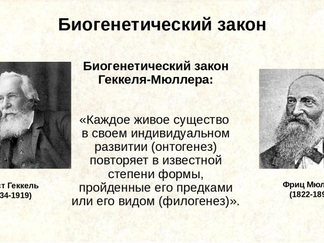 Биогенетический закон Биогенетический закон Геккеля-Мюллера: «Каждое живое существо в своем индивидуальном развитии (онтогенез) повторяет в известной степени формы, пройденные его предками или его видом (филогенез)». Эрнст Геккель (1834-1919) Фриц М…