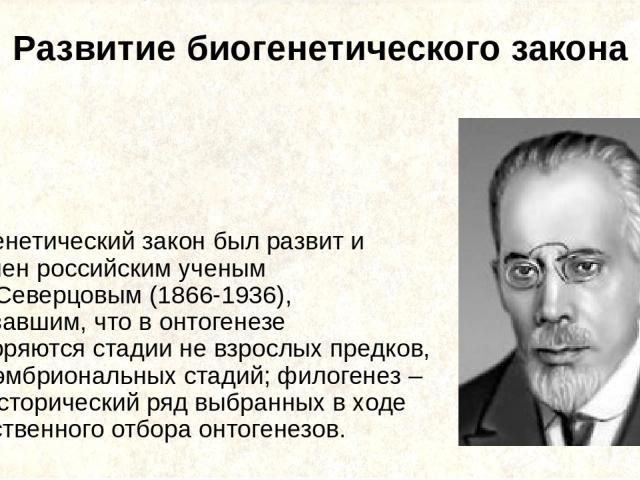 Развитие биогенетического закона Биогенетический закон был развит и уточнен российским ученым А.Н. Северцовым (1866-1936), показавшим, что в онтогенезе повторяются стадии не взрослых предков, а их эмбриональных стадий; филогенез – это исторический р…