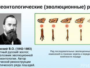 Палеонтологические (эволюционные) ряды Ковалевский В.О. (1842-1883) известный ру