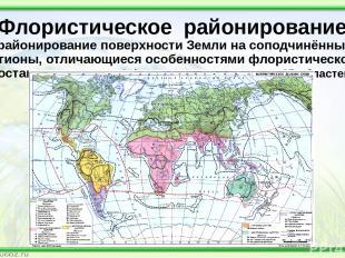 Флористическое районирование (районирование поверхности Земли на соподчинённые р