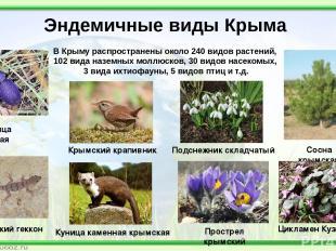 Эндемичные виды Крыма Жужелица крымская Сосна крымская Цикламен Кузнецова Подсне