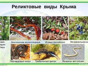 Реликтовые виды Крыма Орхидея Комперия Компера Иглица понтийская Можжевельник вы