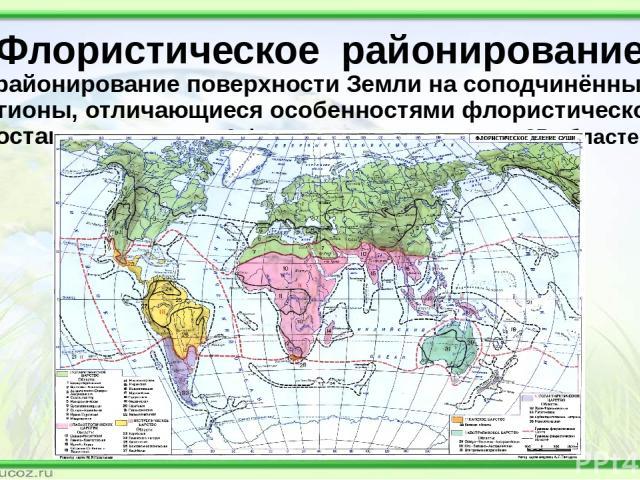 Флористическое районирование (районирование поверхности Земли на соподчинённые регионы, отличающиеся особенностями флористического состава; выделяется 6 флористических царств и 35 областей)