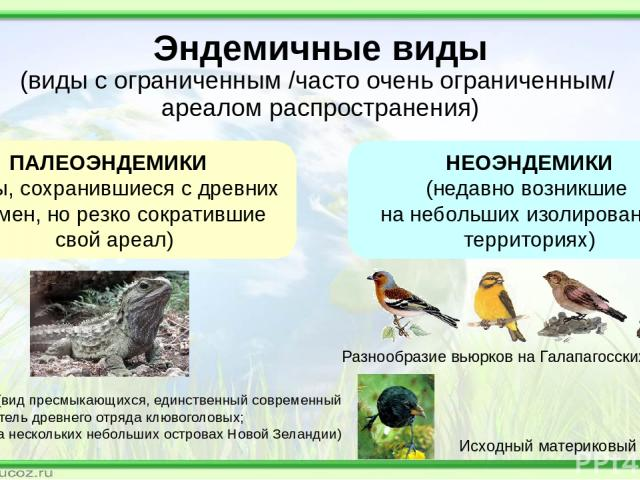 Эндемичные виды (виды с ограниченным /часто очень ограниченным/ ареалом распространения) ПАЛЕОЭНДЕМИКИ (виды, сохранившиеся с древних времен, но резко сократившие свой ареал) НЕОЭНДЕМИКИ (недавно возникшие на небольших изолированных территориях) Гат…