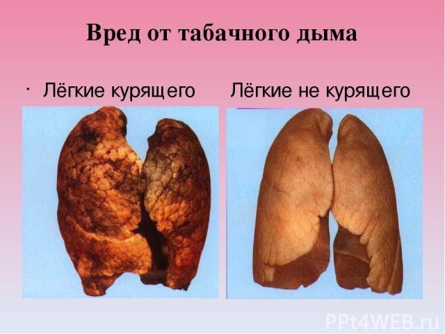 Вред от табачного дыма Лёгкие курящего человека. Лёгкие не курящего человека.