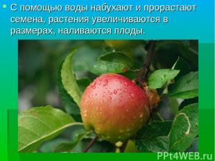 С помощью воды набухают и прорастают семена, растения увеличиваются в размерах,