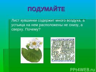 Лист кувшинки содержит много воздуха, а устьица на нем расположены не снизу, а с