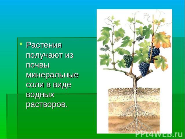Растения получают из почвы минеральные соли в виде водных растворов.
