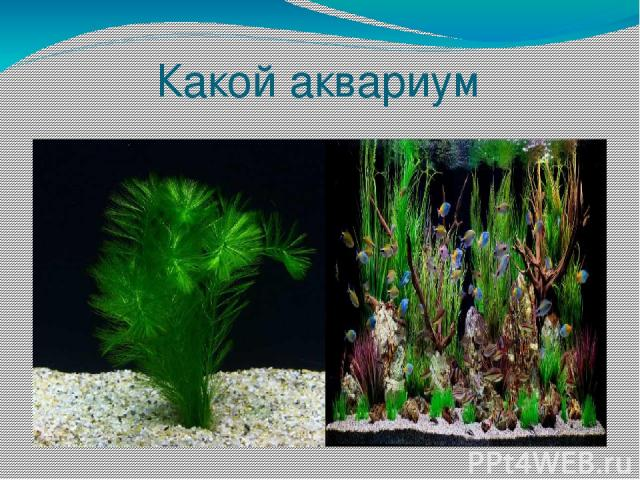 Какой аквариум