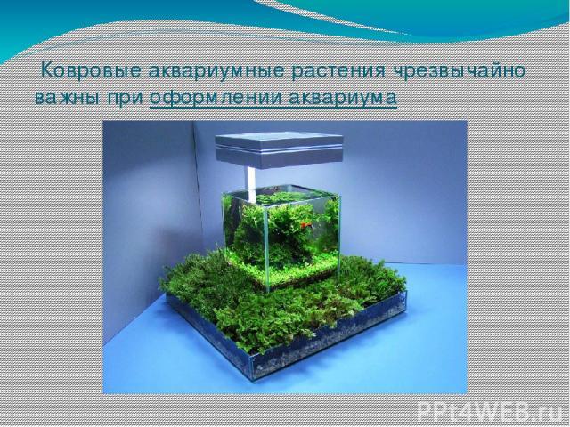 Ковровые аквариумные растения чрезвычайно важны приоформлении аквариума