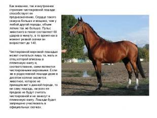 Как внешнее, так и внутреннее строение чистокровной лошади способствует ее предн