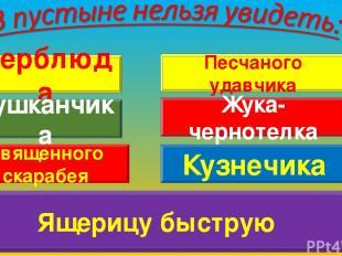 Верблюда Тушканчика Священного скарабея Кузнечика Песчаного удавчика Жука-чернот