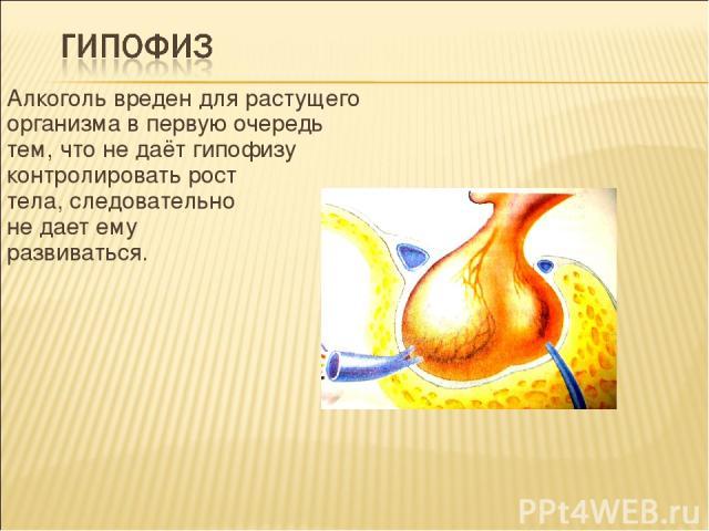 Алкоголь вреден для растущего организма в первую очередь тем, что не даёт гипофизу контролировать рост тела, следовательно не дает ему развиваться.