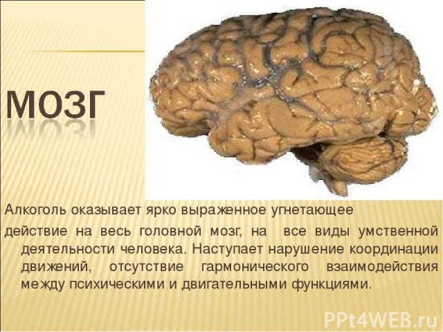 Алкоголь оказывает ярко выраженное угнетающее действие на весь головной мозг, на все виды умственной деятельности человека. Наступает нарушение координации движений, отсутствие гармонического взаимодействия между психическими и двигательными функциями.