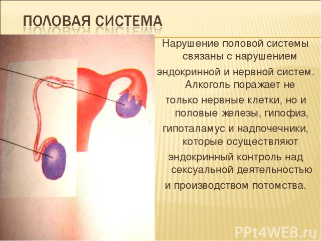 Нарушение половой системы связаны с нарушением эндокринной и нервной систем. Алкоголь поражает не только нервные клетки, но и половые железы, гипофиз, гипоталамус и надпочечники, которые осуществляют эндокринный контроль над сексуальной деятельность…
