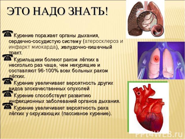 ЭТО НАДО ЗНАТЬ! Курение поражает органы дыхания, сердечно-сосудистую систему (атеросклероз и инфаркт миокарда), желудочно-кишечный тракт. Курильщики болеют раком лёгких в несколько раз чаще, чем некурящие и составляют 96-100% всех больных раком лёгк…