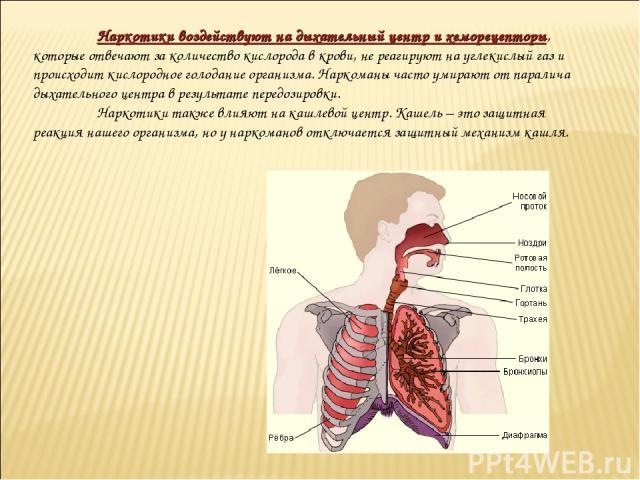 Наркотики воздействуют на дыхательный центр и хеморецепторы, которые отвечают за количество кислорода в крови, не реагируют на углекислый газ и происходит кислородное голодание организма. Наркоманы часто умирают от паралича дыхательного центра в рез…