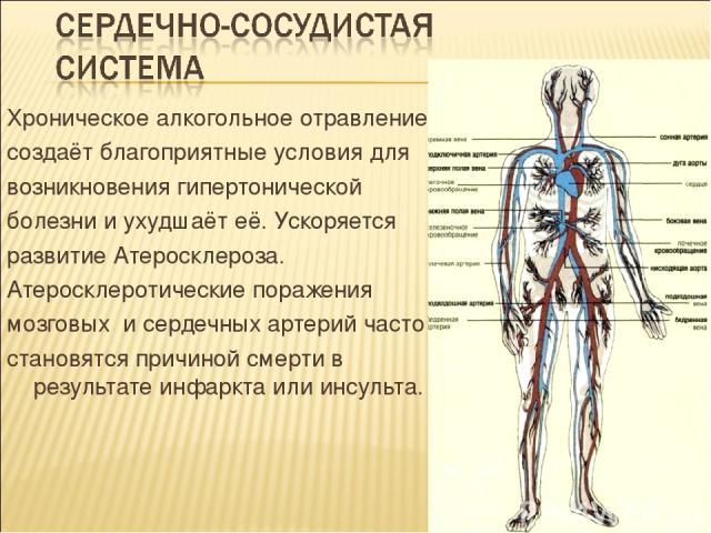 Хроническое алкогольное отравление создаёт благоприятные условия для возникновения гипертонической болезни и ухудшаёт её. Ускоряется развитие Атеросклероза. Атеросклеротические поражения мозговых и сердечных артерий часто становятся причиной смерти …