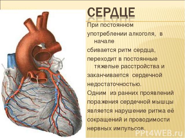 При постоянном употреблении алкоголя, в начале сбивается ритм сердца, переходит в постоянные тяжелые расстройства и заканчивается сердечной недостаточностью. Одним из ранних проявлений поражения сердечной мышцы является нарушение ритма её сокращений…