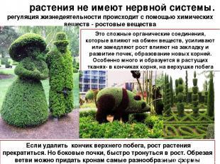 растения не имеют нервной системы. регуляция жизнедеятельности происходит с помо