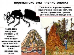нервная система членистоногих Такие дома сооружают муравьи. В их семьях установл