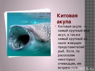 Китовая акула Китовая акула — самый крупный вид акул, а также самый крупный из н