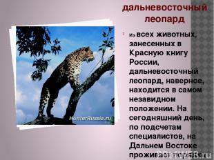 дальневосточный леопард Из всех животных, занесенных в Красную книгу России, дал