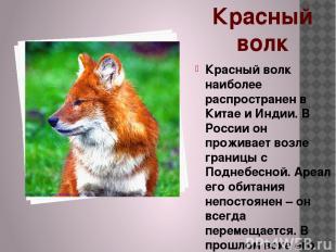 Красный волк Красный волк наиболее распространен в Китае и Индии. В России он пр