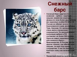 Снежный барс Снежный барс (другое его название – ирбис) – крупный хищник семейст