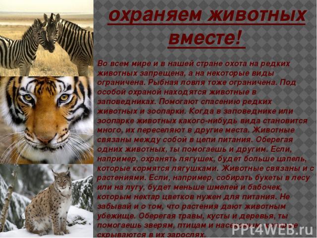 охраняем животных вместе! Во всем мире и в нашей стране охота на редких животных запрещена, а на некоторые виды ограничена. Рыбная ловля тоже ограничена. Под особой охраной находятся животные в заповедниках. Помогают спасению редких животных и зоопа…