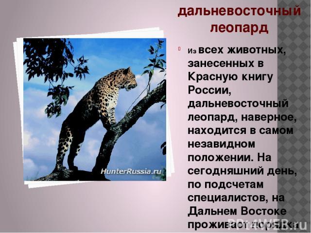 дальневосточный леопард Из всех животных, занесенных в Красную книгу России, дальневосточный леопард, наверное, находится в самом незавидном положении. На сегодняшний день, по подсчетам специалистов, на Дальнем Востоке проживает порядка 30-40 леопар…
