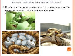 Половое поведение и размножение змей Большинство змей размножаютсяоткладкой яиц