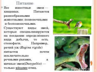 Питание Все известные змеи—хищники. Питаются разнообразными животными:позвоно