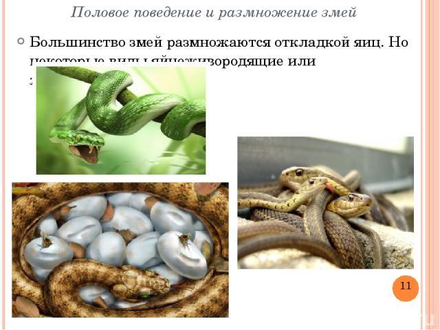 Половое поведение и размножение змей Большинство змей размножаютсяоткладкой яиц. Но некоторые видыяйцеживородящиеилиживородящие.